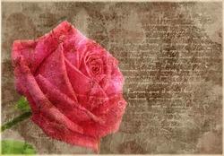 Old grunge vintage postcard with beautiful pink rose
