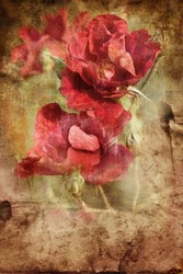Old grunge vintage postcard with beautiful  roses/Flower Card/Beautiful  rose with buds/Valentines day background