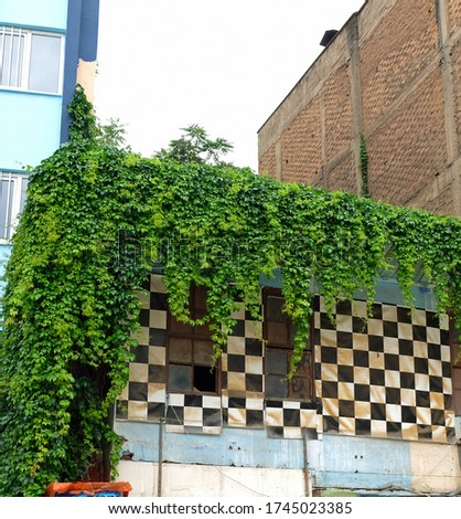 Old house covered by ivy with green leaves Stok fotoğraf ©