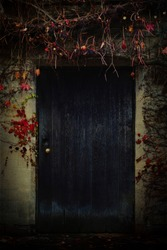 Old house facade with wooden dark blue door covered with wild berries and red vines.