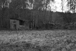 Old hovel on forest edge