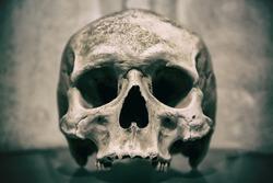 Old human skull close up. Toned image.