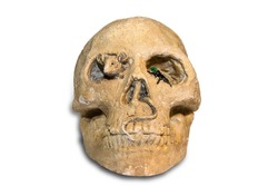 Old human skull - horror sculpture with a mouse and a fly on a white background