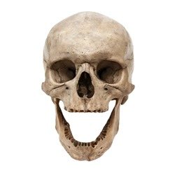 Old human skull view from front without teeth