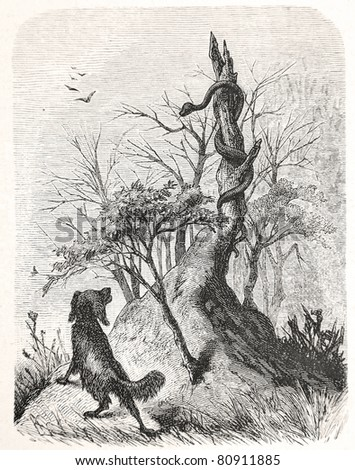 "Old illustration depicting a dog encounters a cobra in South Africa, drawn by Karl Liebscher in Emil Holub's ""Seven Years in South Africa"", published in Vienna, 1881"