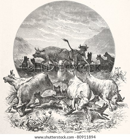 "Old illustration depicting hyenas attack a herd of cattle in South Africa in 1880, drawn by Karl Liebscher in Emil Holub's ""Seven Years in South Africa"", published in Vienna, 1881"