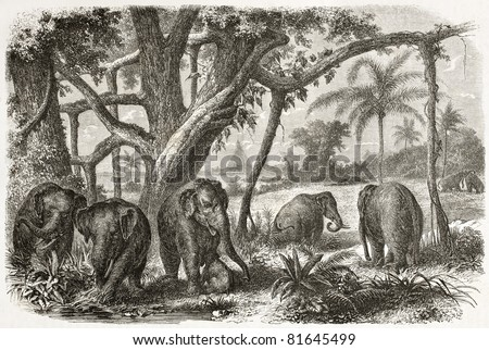 Old illustration of Elephants herd in Ceylon. Created by Jules Noel, published on Le Tour du Monde, Paris, 1960
