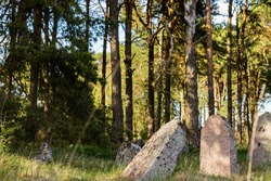 Old Jewish cemetery, centuries-old graves surrounded by pine trees