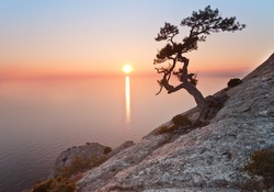 old juniper tree and sunset over the sea
