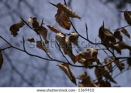 Old leaves on a branch