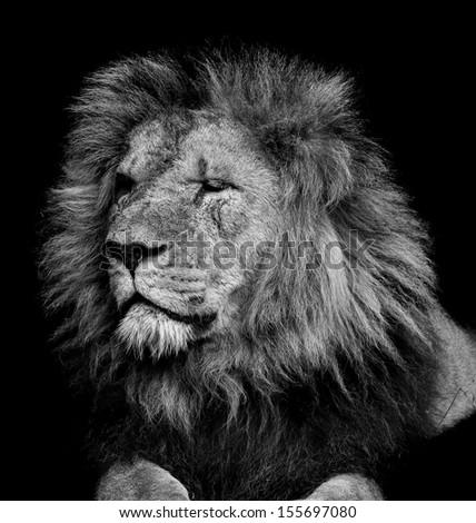 Old Lion #155697080