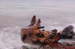 Old Log and Cold Sea
