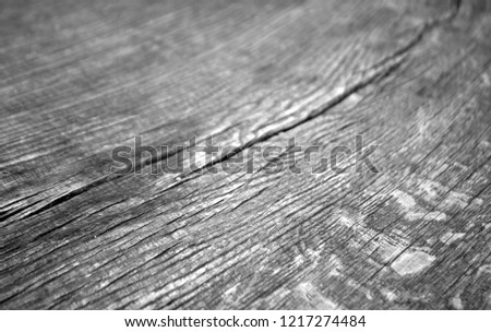 Old log cut macro in black and white. Abstract background and texture for design. #1217274484