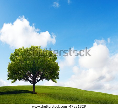 Old Lonely Tree
