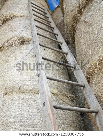 old long wood ladder in the barn of the farm
