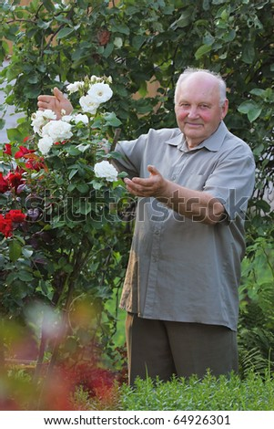 Old man - grower of roses next to rose bush in his beautiful garden.