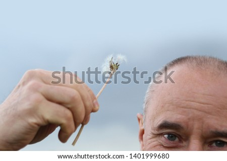 old man holds in his hand a half-over Dandelion next to a bald head, concept of baldness and hair loss, close-up
