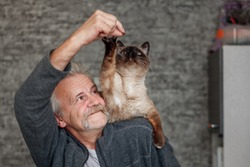 Old man plays with siamese cat in the kitchen