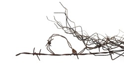 Old metal barbed wire fence protection isolated on white background and texture