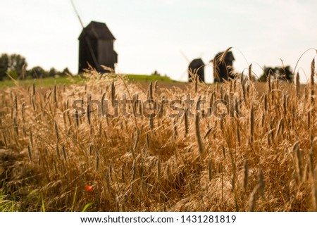 Old Mill on the field of rye field