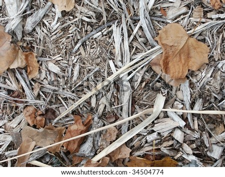 Old mulch and dry leafs
