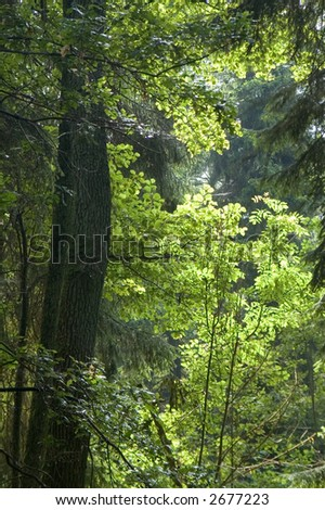 Old natural forest in the middle of summer, Europe,Poland,Bialowieza Forest