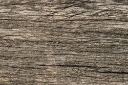 Old natural wooden shabby background close up, old wood background, texture of bark wood use as natural background