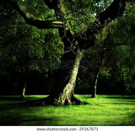 Old oak in the park in Austria