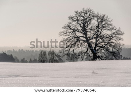 Old oak tree on white snow field near forest in cold winter day overcast moody sky light