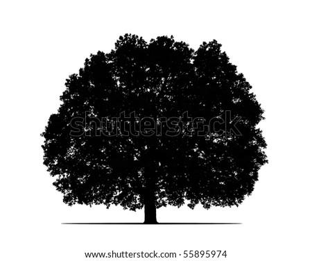 old oak tree silhouette