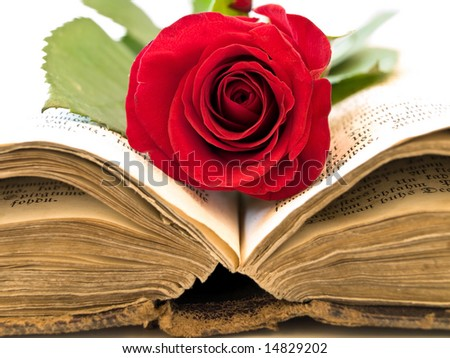Book  Stock-photo-old-open-book-with-the-red-rose-into-14829202