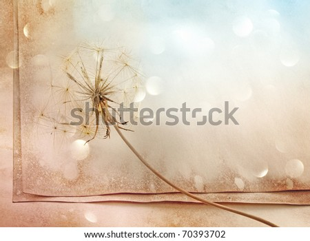 old paper background with dandelion
