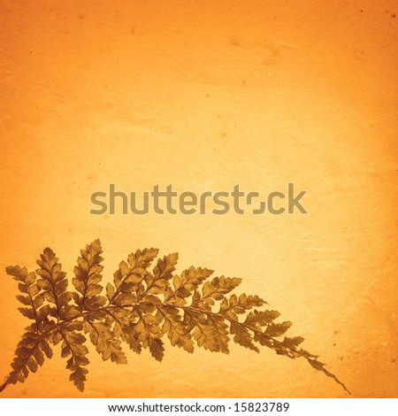 old paper background with fern leaf