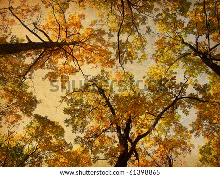 old paper. retro image of Autumn Trees on the sky background