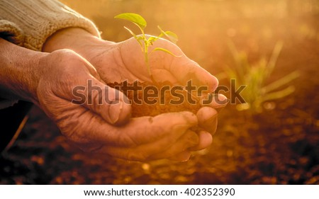 Shutterstock Old Peasant Hands holding a green young Plant and earthy Handful in Morning Sunlight Rays Earth Day Concept