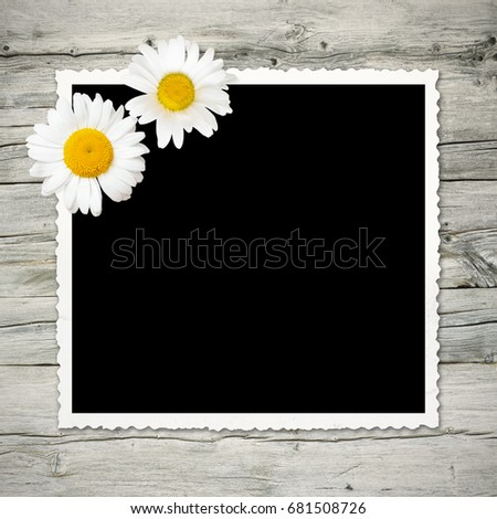 Old photo with black background and white frame on wooden wall, decorated with two daisy blossoms; Placeholder for your picture; Vintage picture frame