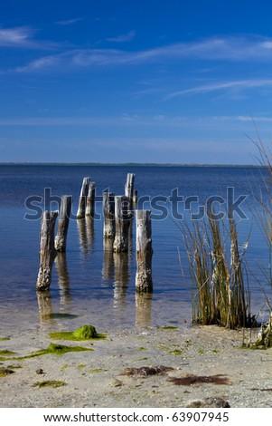 Old pilings in blue water