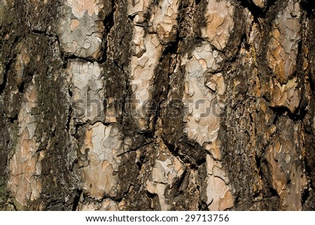 Old pine bark texture background