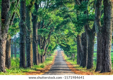 Photo of Old Pine road, famous road at Gia Lai, Vietnam.