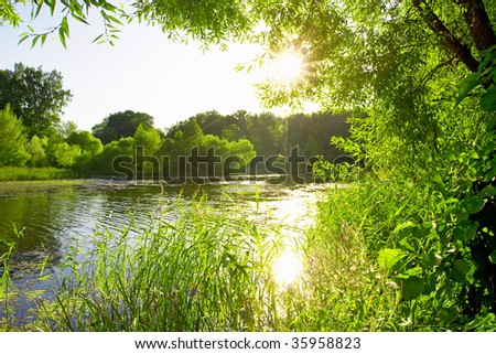 Old pond in the forest with the sun shining through the branches of the trees