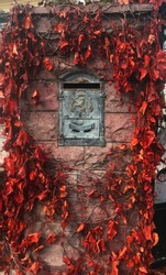 old postbox covered by ivy