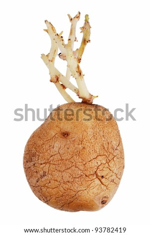 Old potatoes with sprouted shoots on a white background