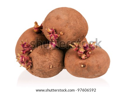 Old potatoes with sprouts isolated on white background