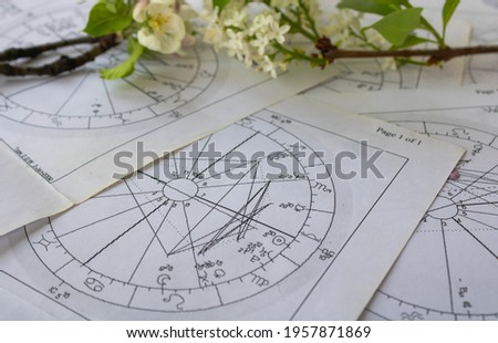 Old printed charts with white lilac flower branch Stock photo ©