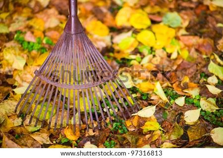 Old rake and maple leafs on the ground, horizon shot.