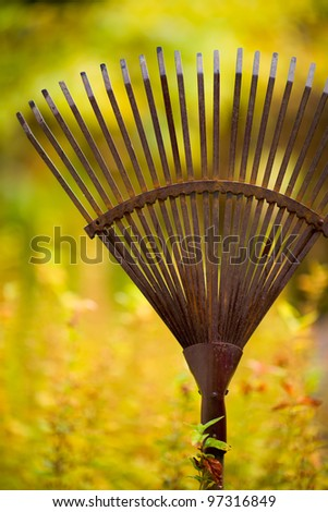 Old rake ready to autumn work, colors of autumn on the background, vertical shot.
