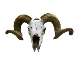 Old ram skull isolated on white