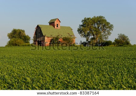 Old red barn and field of soybeans in rural Illinois