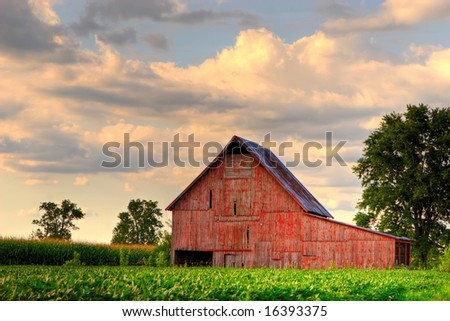 Old, red barn in corn field