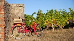 Old red bike in the vineyards in France.